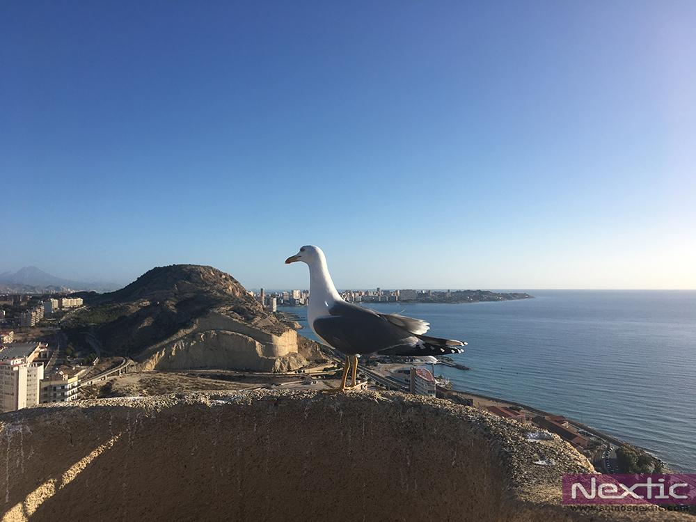 Nextic-Manu-nunez-alicante-tramuntana-aventura-turismo (12)