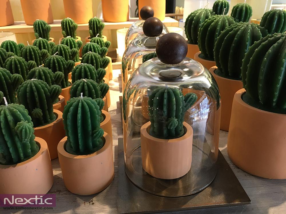 cactus-tendencia-decoracion2062