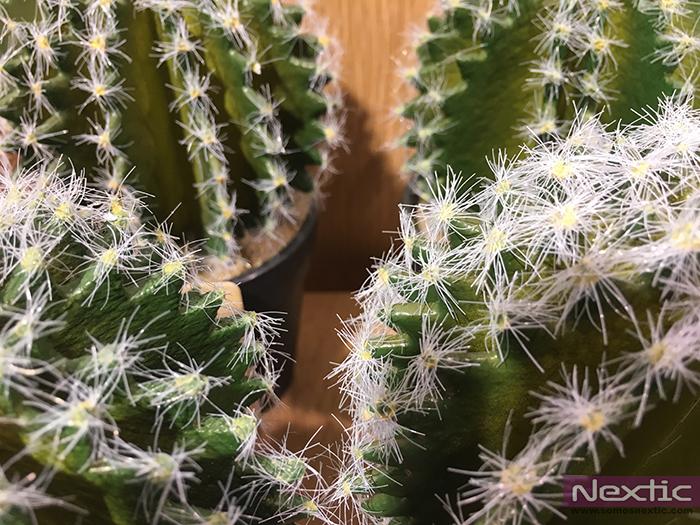 Sigue la tendencia en decoración y pon un cactus en tu vida